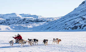 Sled Dogs Greenland Mar 2020