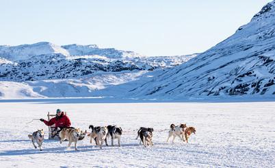 Sled Dogs Greenland Mar 2020