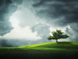 In turbulent times, a tree stands firm and flourishes