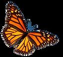 Dia De Los Muertos Monarch Butterfly