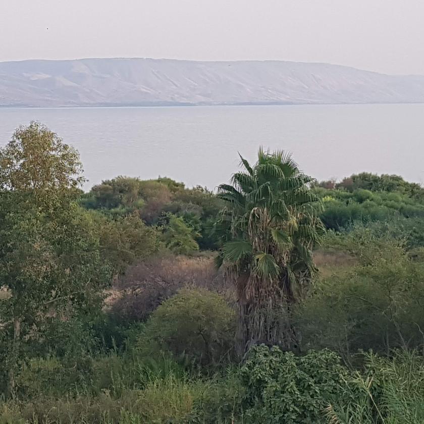 צימרים ליד חוף הכנרת ברמת הגולן