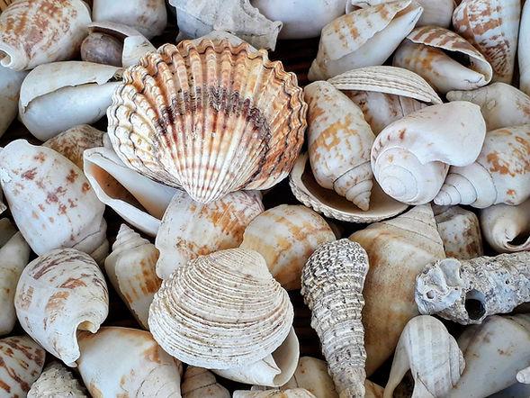 george-girnas-shells.jpg