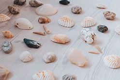 oskars-sylwan-shells.jpg