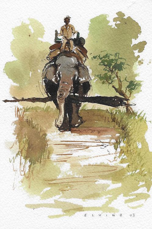 A dos d'éléphant