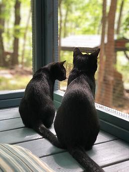 Peppa and Smokey on catio.jpg