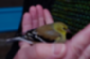 BirdEdit.png