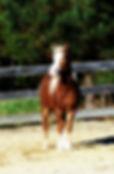 golden boy project pony.jpg