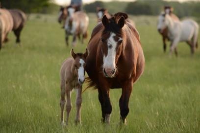 soledad-lorieto-bay mare with foal
