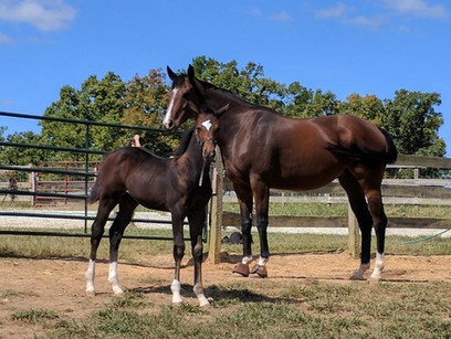 bay mare and foal in pasture.jpg