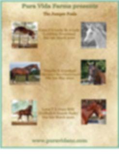 jumper foal sales 2020.jpg