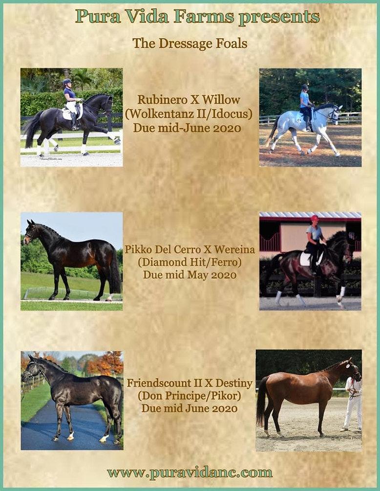 dressage foal sales 2020.jpg
