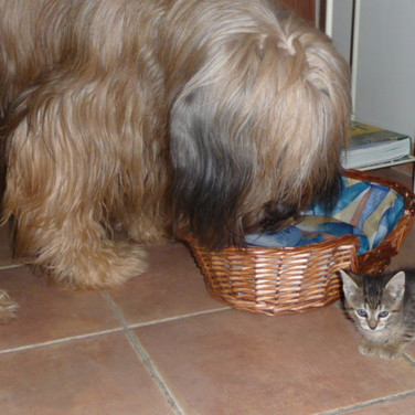 Captain Cook et son chat