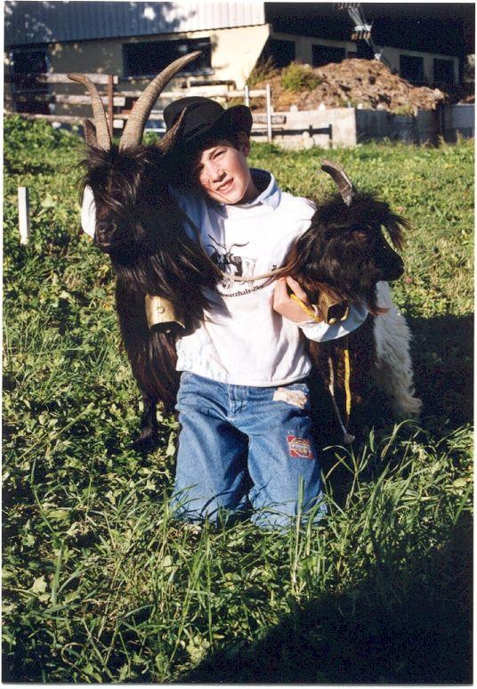Walliser Schwarzhalsziegen 93-2001 058.jpg