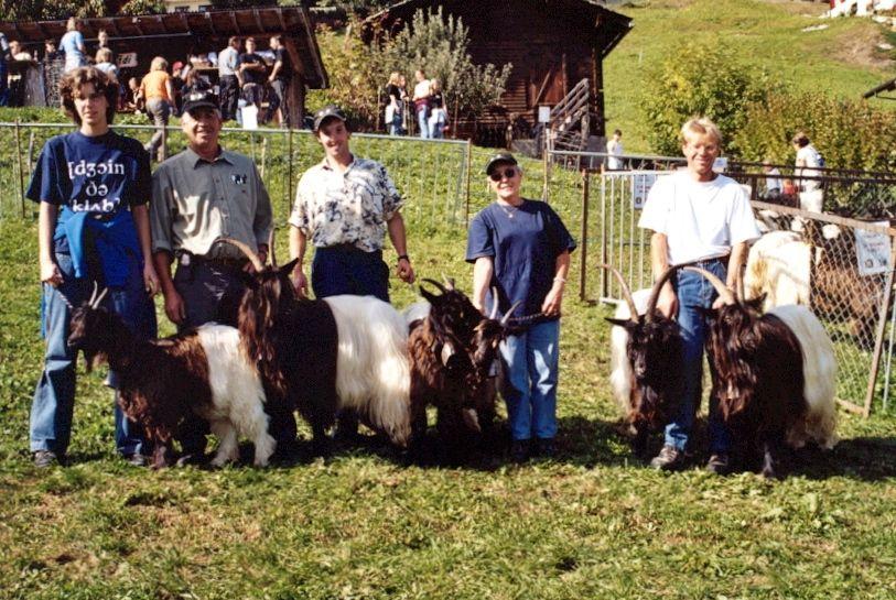 Walliser Schwarzhalsziegen 2004-2005 033.jpg