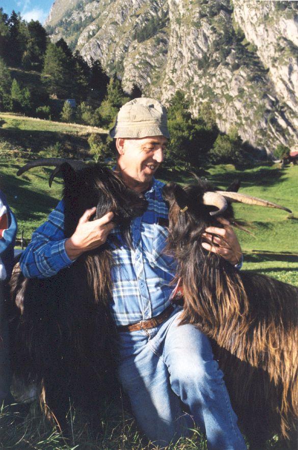 Walliser Schwarzhalsziegen 93-2001 033.jpg