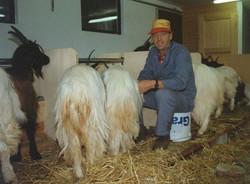 Walliser Schwarzhalsziegen 93-2001 044.jpg