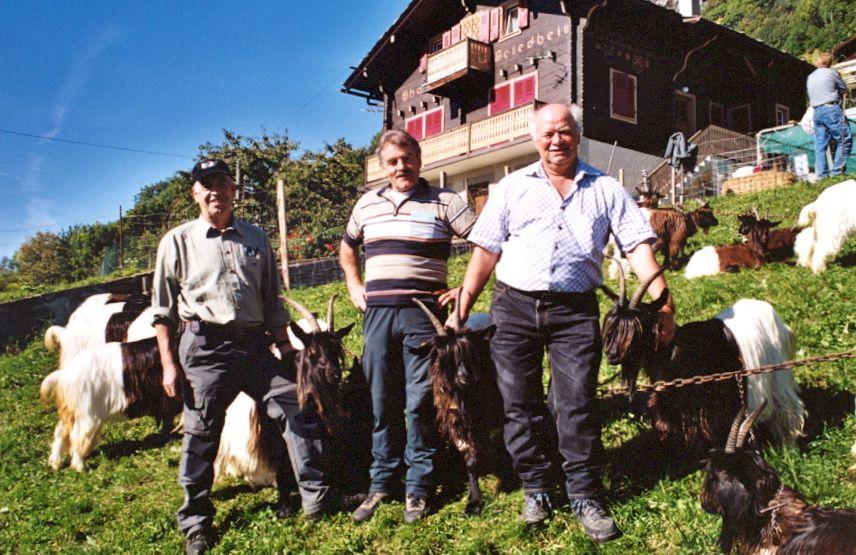 Walliser Schwarzhalsziegen 2004-2005 027.jpg