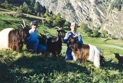 Walliser Schwarzhalsziegen 93-2001 034.jpg