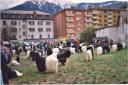 Walliser Schwarzhalsziegen 2001-2004 051.jpg