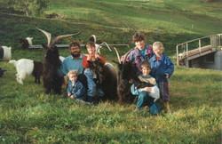 Walliser Schwarzhalsziegen 93-2001 046.jpg