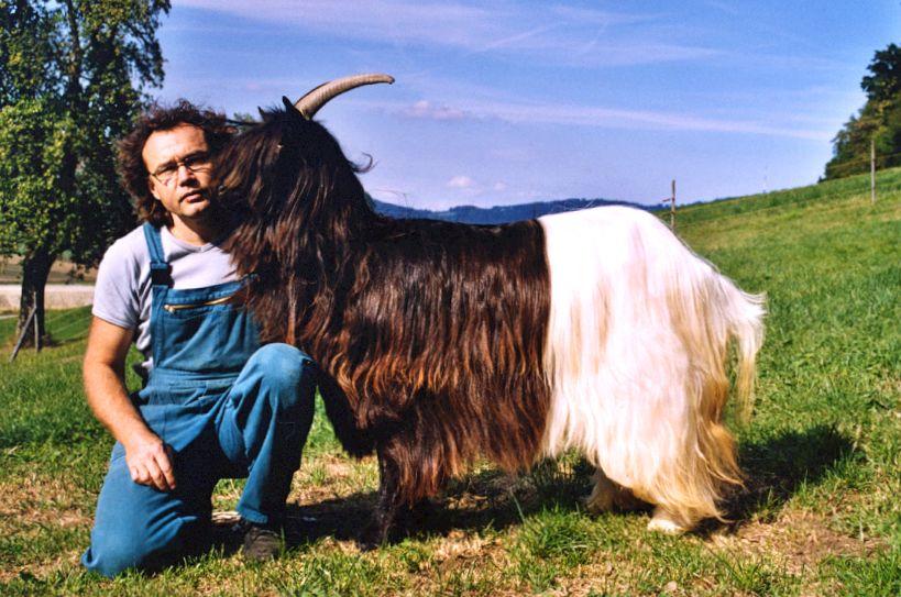 Walliser Schwarzhalsziegen 2004-2005 059.jpg