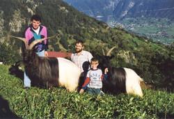 Walliser Schwarzhalsziegen 93-2001 036.jpg