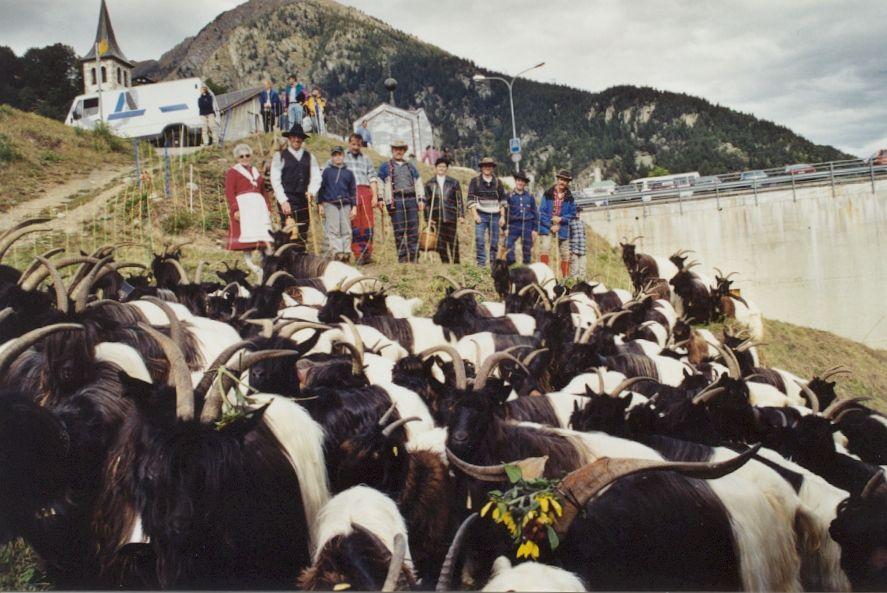 Walliser Schwarzhalsziegen 93-2001 018.jpg