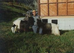 Walliser Schwarzhalsziegen 93-2001 047.jpg