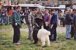 Walliser Schwarzhalsziegen 2001-2004 064.jpg