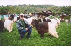 Walliser Schwarzhalsziegen 2001-2004 040.jpg