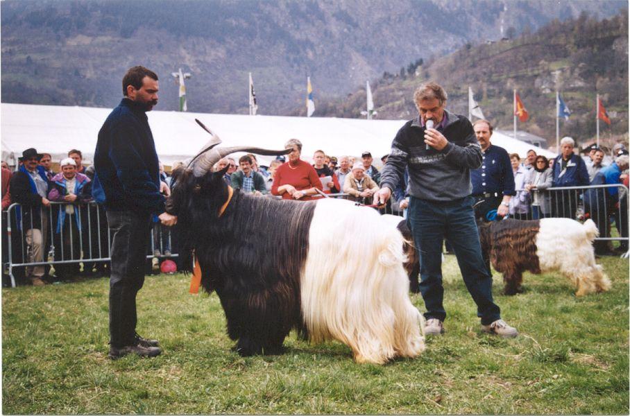 Walliser Schwarzhalsziegen 2001-2004 057.jpg