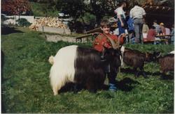 Walliser Schwarzhalsziegen 93-2001 041.jpg
