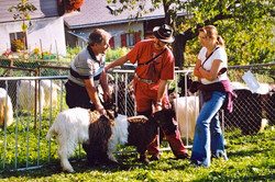Walliser Schwarzhalsziegen 2004-2005 017.jpg