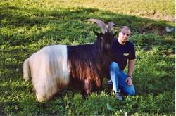 Walliser Schwarzhalsziegen 2004-2005 008.jpg