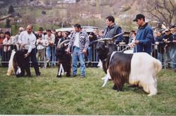 Walliser Schwarzhalsziegen 2001-2004 063.jpg