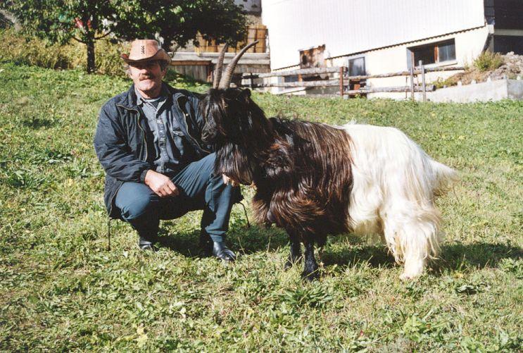 Walliser Schwarzhalsziegen 93-2001 064.jpg