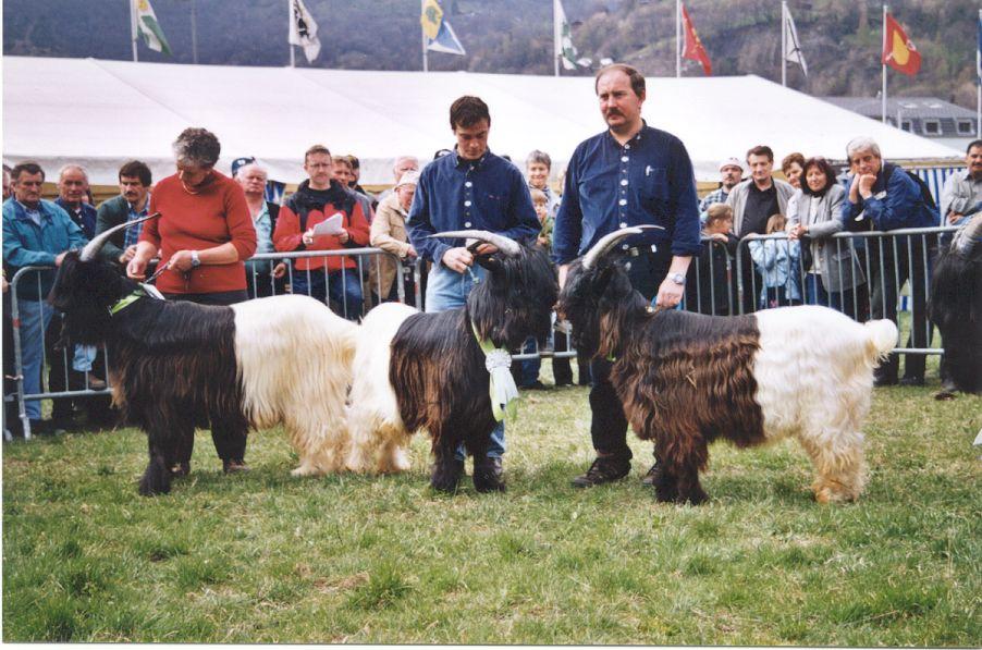 Walliser Schwarzhalsziegen 2001-2004 059.jpg