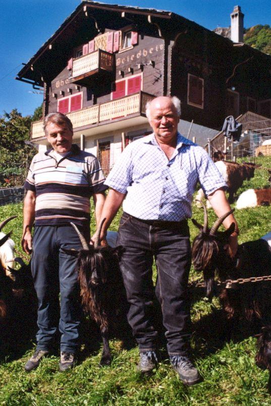 Walliser Schwarzhalsziegen 2004-2005 026.jpg