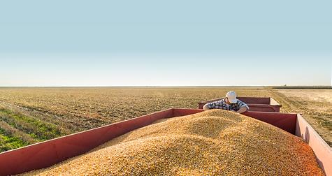 agrilog | champs maïs | récolte.png