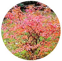 magic tree.jpg