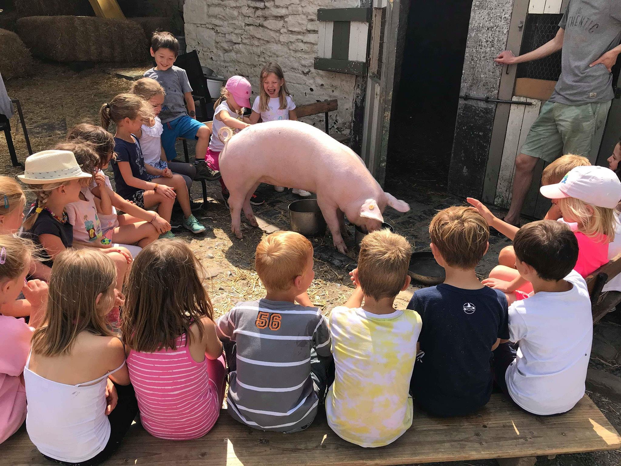 Nourrissage du cochon