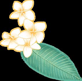 Plumeria%20Flower_edited.png