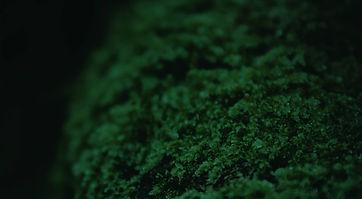 intro-moss2.jpg