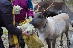 Sami village in Ostersund, Sweden