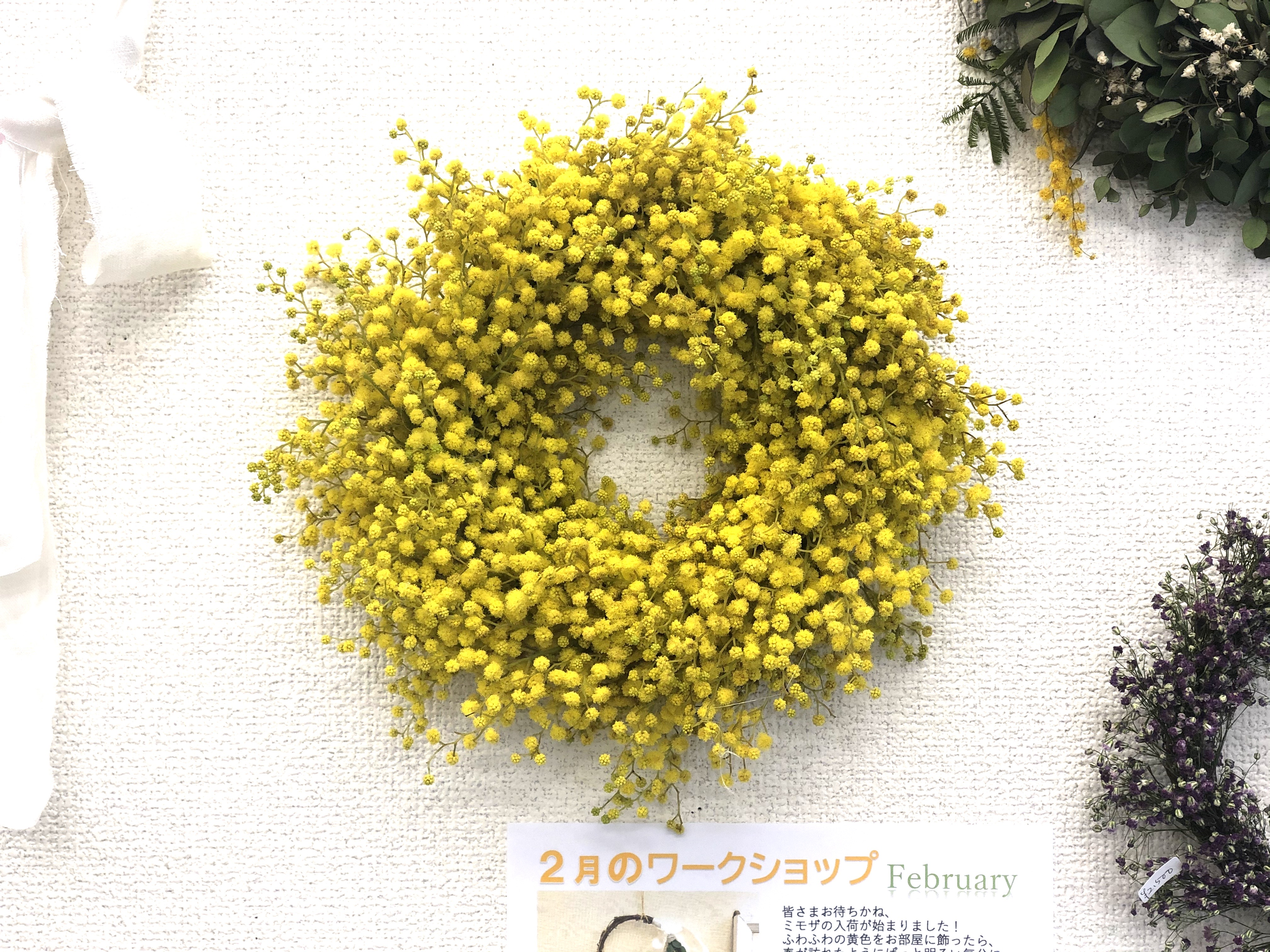 2020 mimosa3