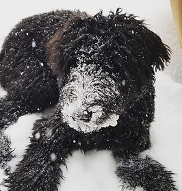 Puppy in snow