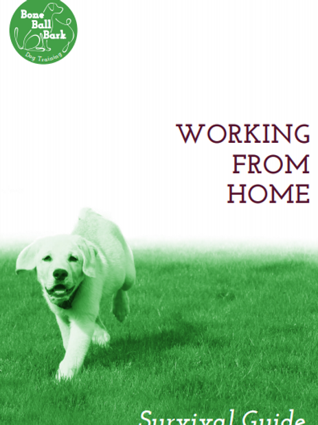 Working From Home: Survival Guide