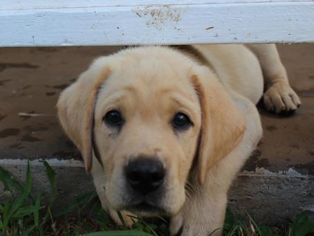 Puppyhood: First Year Tips