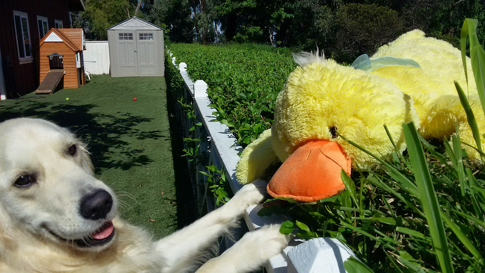 Golden Retriever Easter Duck Toy