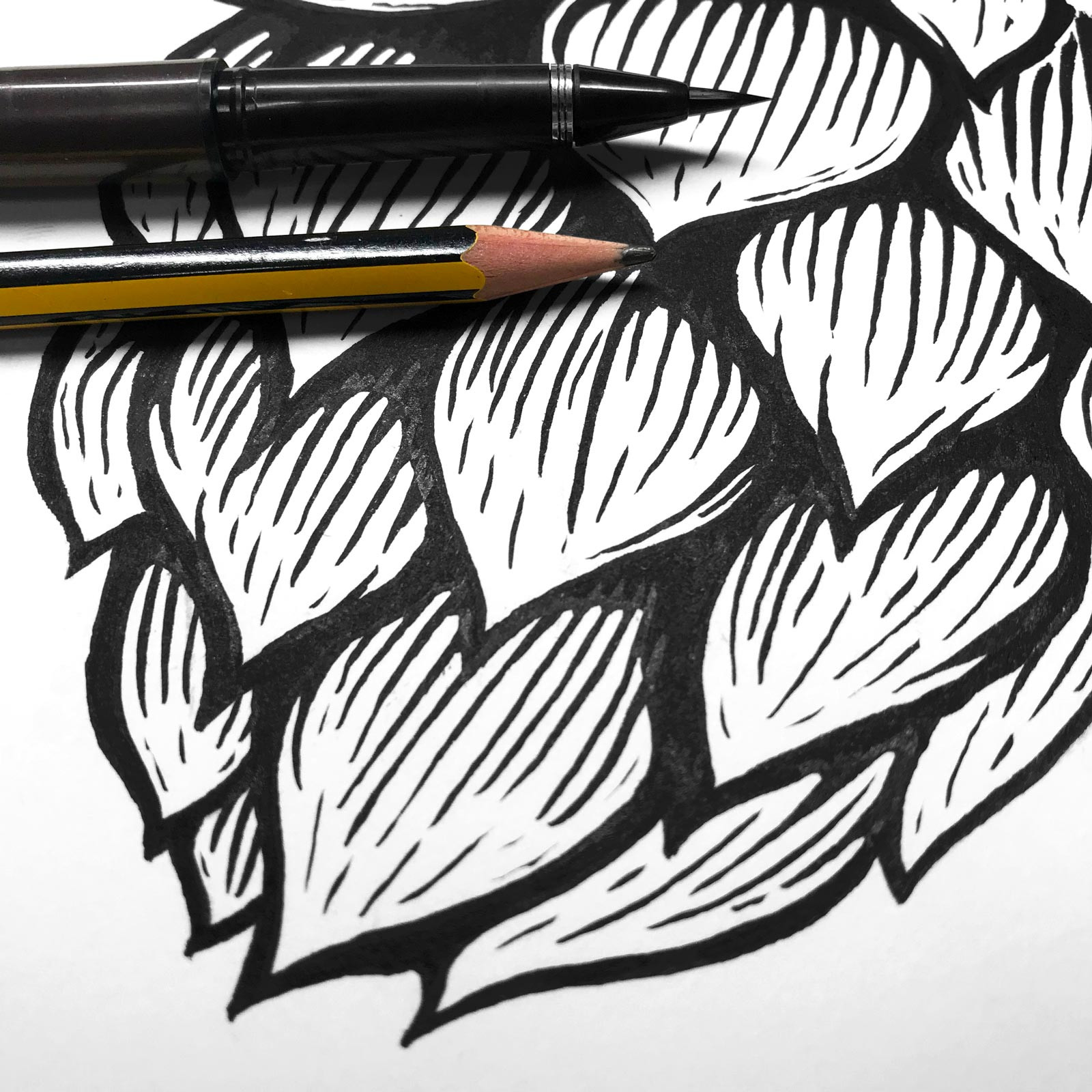 Hop Drawing for Redchurch Apricot Pale Ale Label Design